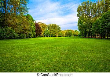 krajobraz., trawa, field., zielony las, piękny