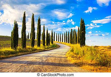 krajobraz, Włochy, cyprys,  Tuscany, Drzewa, Wiejski, biały, Europa, Droga