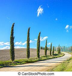 krajobraz, Włochy, cyprys,  Tuscany, Drzewa, biały, Europa, Droga
