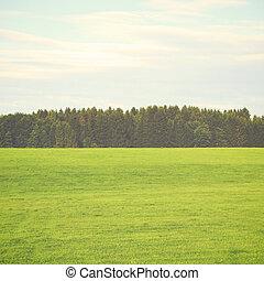 krajobraz, z, sosna, lasy, retro, filtr, skutek