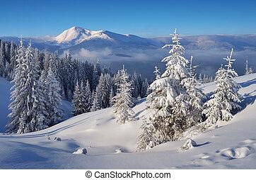 krajobraz, zima, piękny