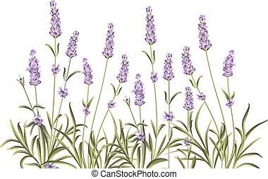 krans, van, lavendel, flowers.