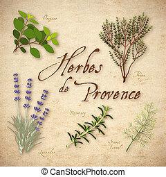 kraut, de, herbes, mischung, provence