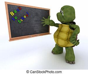 krijt, school, schildpad, plank