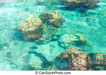 kristallklar, tropisk, hav