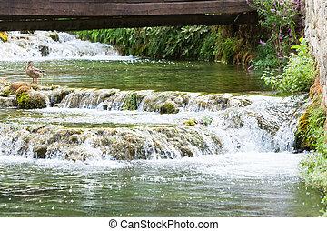 krka, sibenik, kroatien, -, a, holzbrücke, führen, aus,...