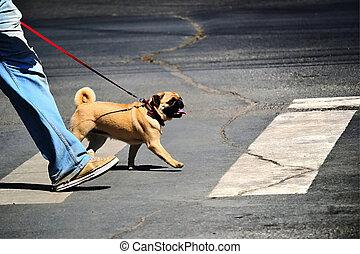 krok, pies, człowiek