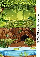 krokodil, an, der, sumpf