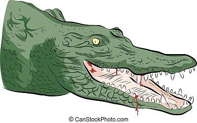 krokodil, hoofd