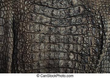 krokodil, leder, beschaffenheit, closeup, hintergrund