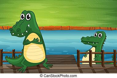 krokodiler, in, den, bro