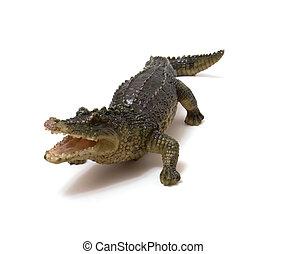 krokodyl, biały, odizolowany, tło, ceramika