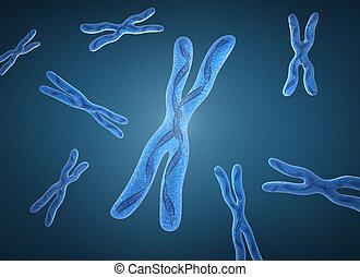 kromosom, x, og, dna., strande