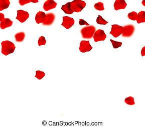 kroonbladen, vliegen, grens
