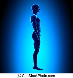 krop, blå, fulde, -, concep, side udsigt