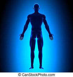 krop, blå, fulde, -, tilbage, concep, udsigter