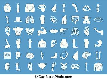 krop, blå, sæt, vektor, menneske, ikon