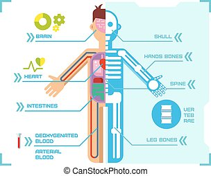 krop, lejlighed, blå, anatomi, baggrund., infographic, konstruktion, menneske