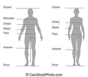 krop, mål, diagram, kort, kvindelig, måling, mandlig, beklæde, størrelse