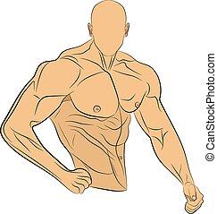 krop, muskel, illustration, vektor, inflated, affattelseen, mand