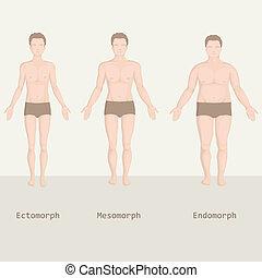 krop, typer, mand