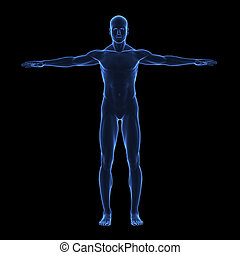 krop, x, menneske, stråle