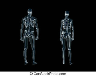 krop, xray, menneske, woman., x-ray, mand