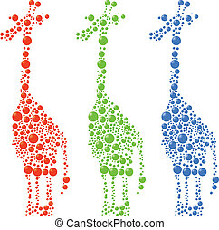 kropkuje, żyrafa