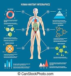 kropp, anatomi, infographic, design, mänsklig