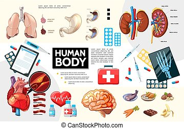 kropp, anatomi, tecknad film, mänsklig, infographics