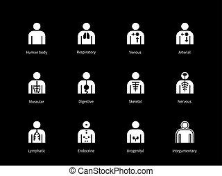 kropp, ikonen, digestiv, bakgrund., svart, system, mänsklig, venous, arteriell