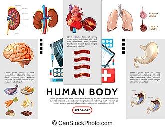 kropp, infographic, tecknad film, mänsklig, mall
