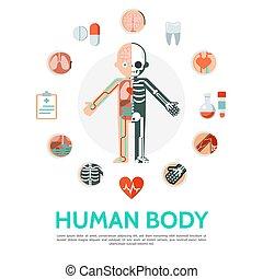 kropp, lägenhet, begrepp, anatomi, mänsklig, runda