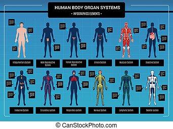 kropp, mänsklig, infographics