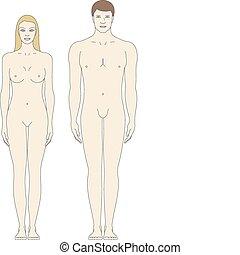 kropp, mallar, manlig, kvinnlig