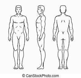 kropp, manlig, vektor, illustration