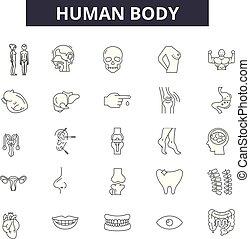kropp, nät, mobile., skissera, ikonen, editable, slag, begrepp, mänsklig, illustrationer, fodra, signs.