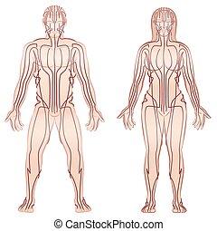 kropp, par, kvinna, meridian, man