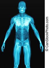 kropp, röntga, mänsklig, avsöka