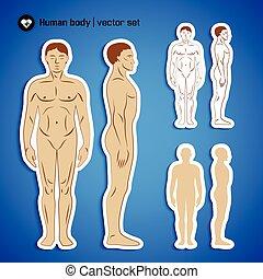 kropp, sätta, mänsklig