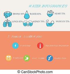 kropp, vatten, vektor, mänsklig, infographics