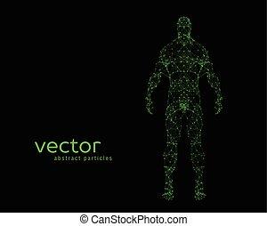 kropp, vektor, illustration, mänsklig