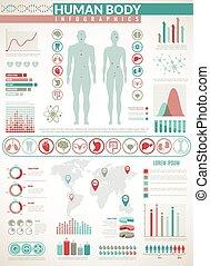 kropp, vektor, organ, ikonen, medicinsk, infographics., grafer, anatomi, kartlägga, infographic, hälsa, inre, mänsklig, diagram