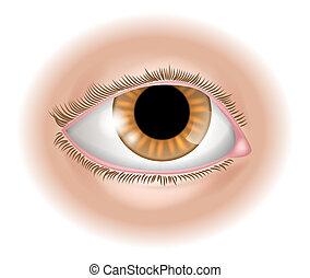 kroppsdel, ögon, illustration