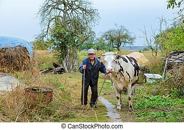 krowy, pole, zielony, rolnik