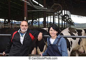 krowy, rolnik, para