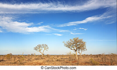 Kruger scrubland - Under African skies. The scrubland of ...