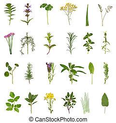 kruid, blad, en, bloem, verzameling