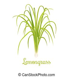 kruid, cymbopogon, culinair, grass., citronella, of,...
