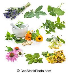 kruid, fris, verzameling, medicinaal